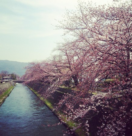 f:id:kusaboshi:20160401112632j:image:w300