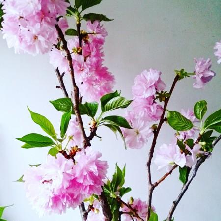 f:id:kusaboshi:20160404113202j:image:w300