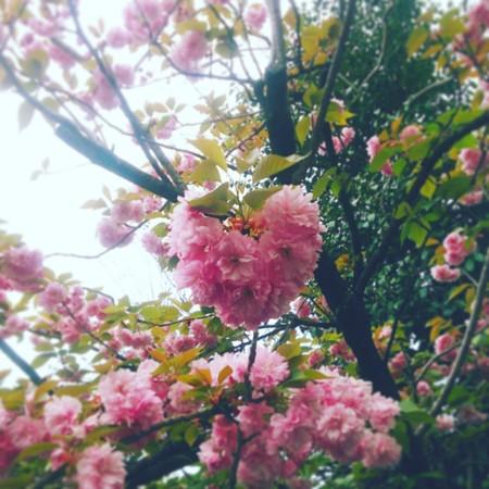 f:id:kusaboshi:20160418180501j:image:w300