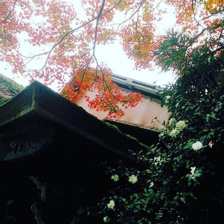 f:id:kusaboshi:20161121170155j:image:w300