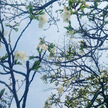 f:id:kusaboshi:20170331122147j:image:w300