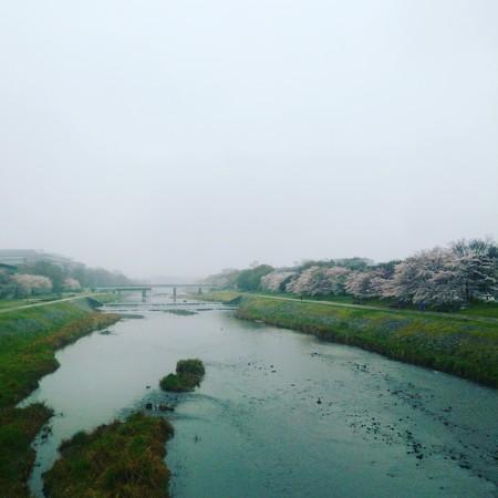 f:id:kusaboshi:20170408130301j:image:w300