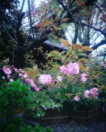 f:id:kusaboshi:20170417115218j:image:w280