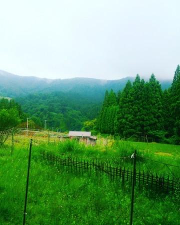 f:id:kusaboshi:20170609094747j:image:w280