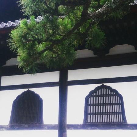 f:id:kusaboshi:20170627100232j:image:w280