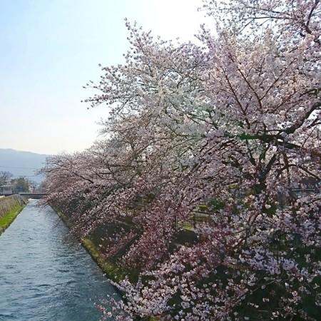 f:id:kusaboshi:20180327101413j:image:w300
