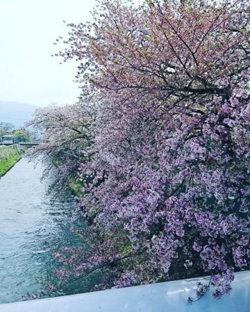 f:id:kusaboshi:20180404131810j:image:w290