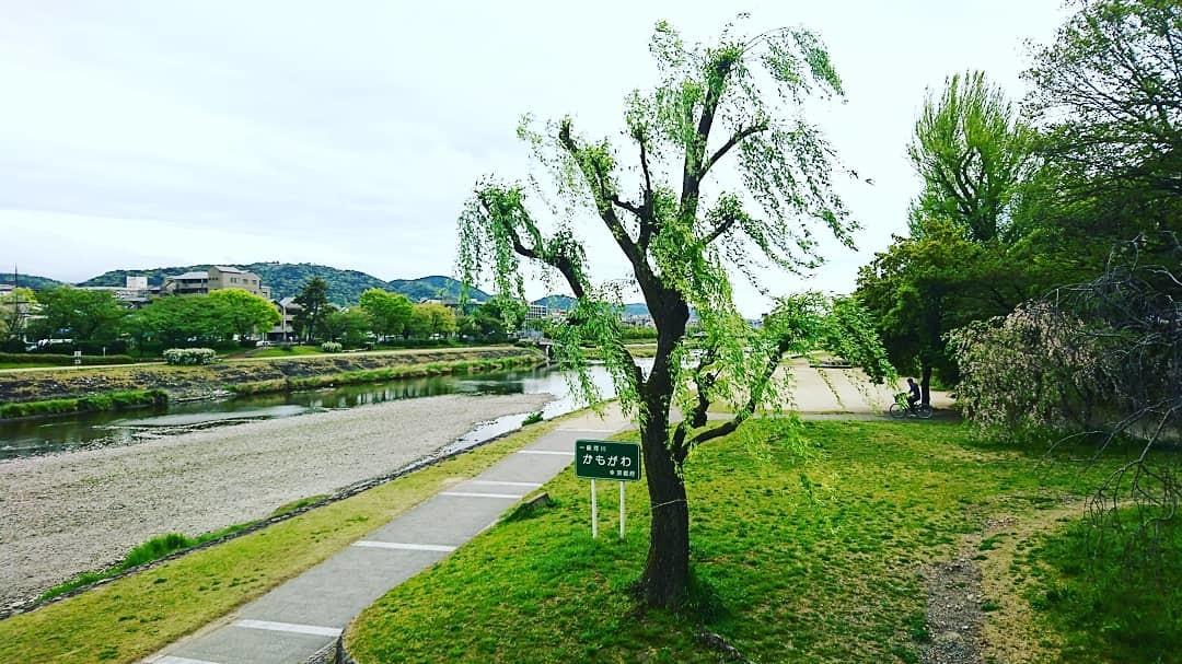 f:id:kusaboshi:20190427111426j:plain