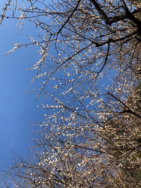 f:id:kusagasuki:20210301131906j:plain