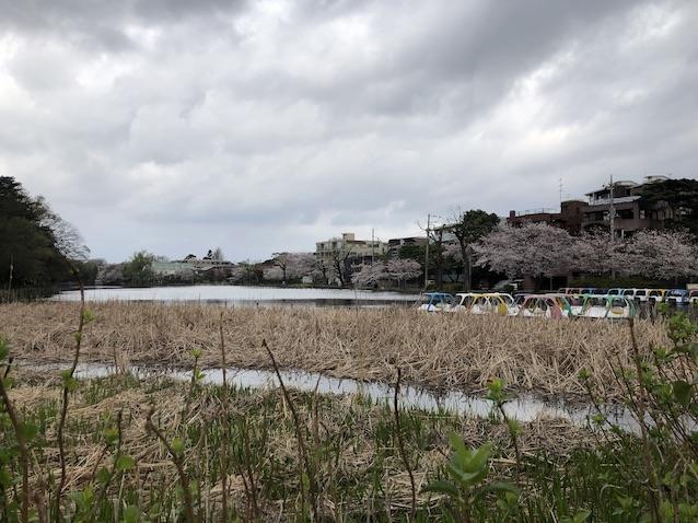f:id:kusagasuki:20210328135508j:plain