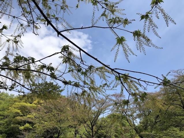 f:id:kusagasuki:20210410191624j:plain