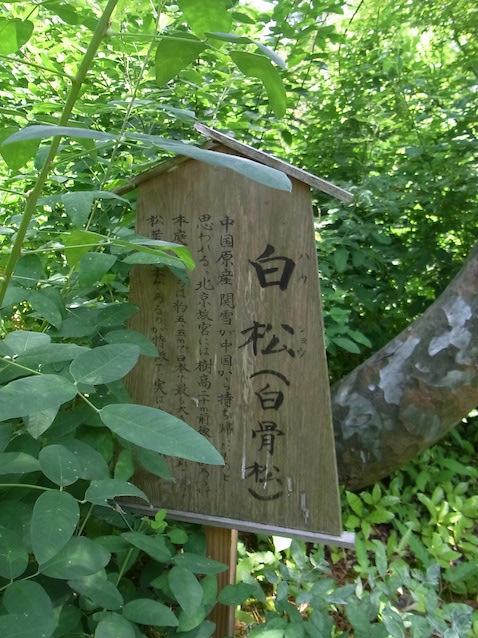 f:id:kusagasuki:20210616201509j:plain