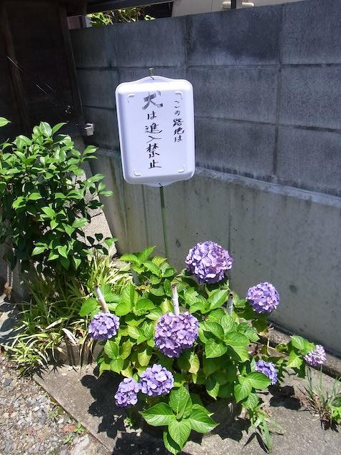 f:id:kusagasuki:20210616221757j:plain