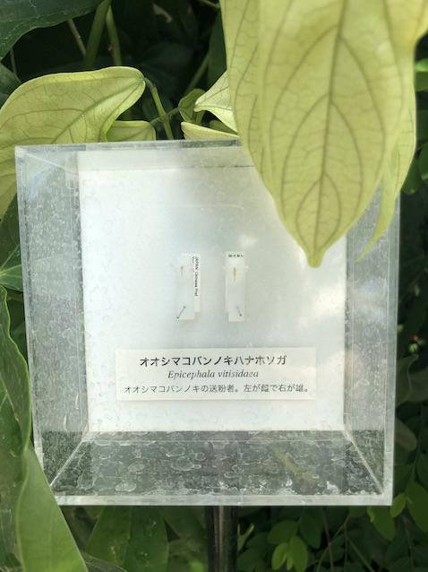 f:id:kusagasuki:20210724220637j:plain