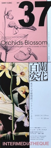 f:id:kusagasuki:20210730080621j:plain