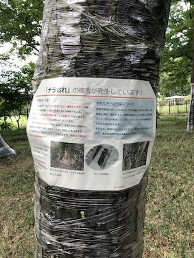 f:id:kusagasuki:20210916211612j:plain