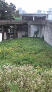 f:id:kusamachi:20111111152225j:image