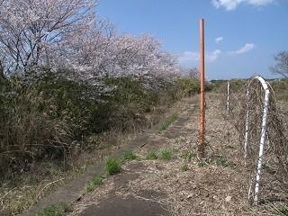 f:id:kusamachi:20120413142914j:image:left