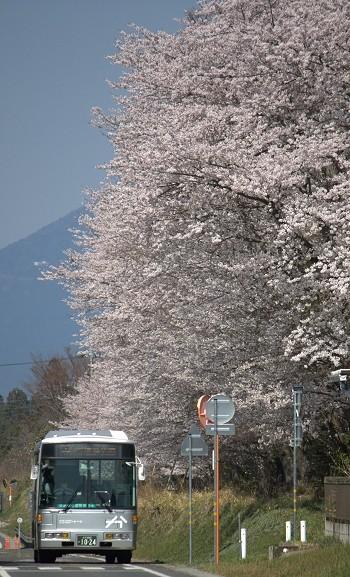 f:id:kusamachi:20120414180222j:image:right