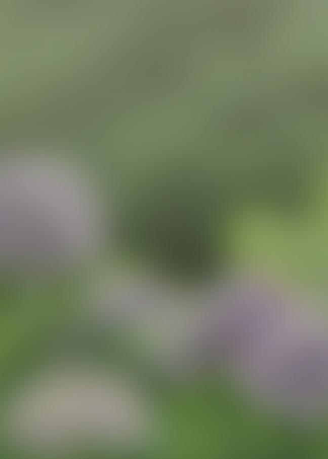 f:id:kusano_k:20191115044832j:plain:w400