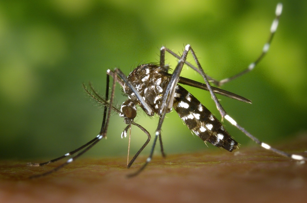 蚊の対策に最新のオススメグッズ