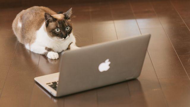ブログに写真を載せる時の注意点