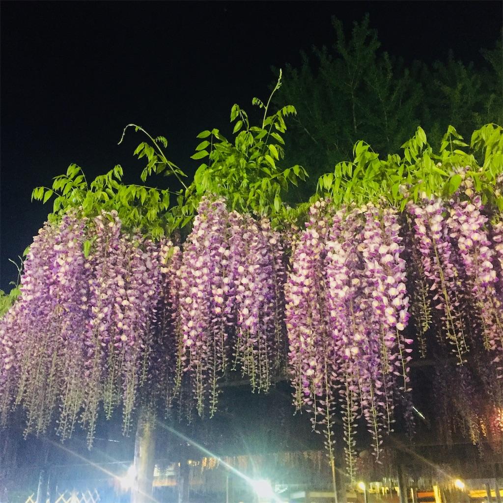 f:id:kushiyakiyaechan:20190509175249j:image