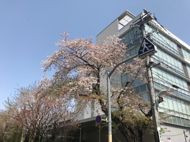 f:id:kusuharyou:20180401203454j:plain