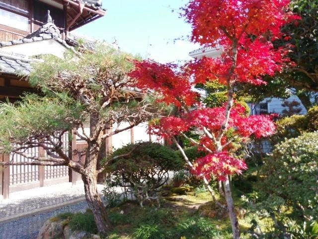 f:id:kusukusu_kun:20201119152058j:image