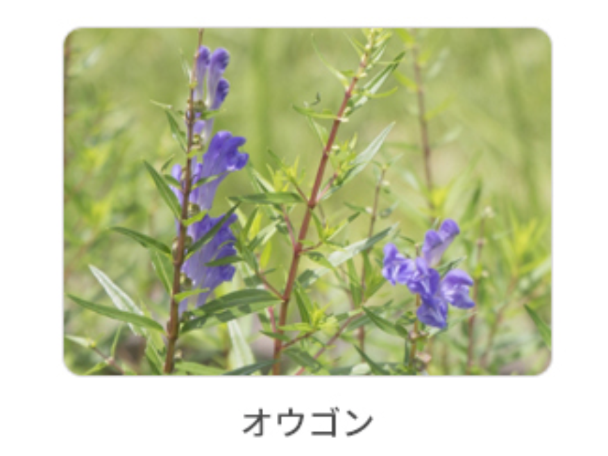f:id:kusumibyebye:20200208115950p:plain
