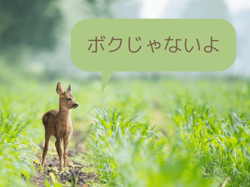 韓国スキンケアブロガーおすすめ シカアイテム 動物のシカではありません