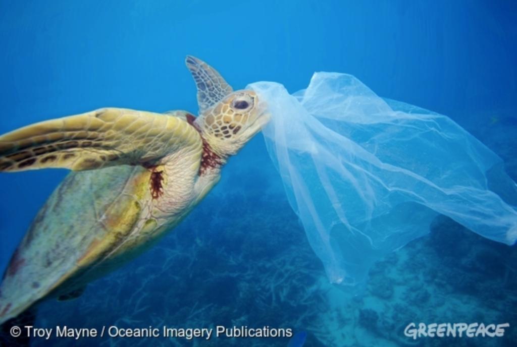 海中のプラスチックバッグを食べようとしているウミガメの写真