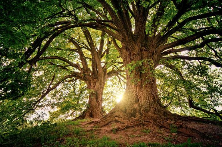 大樹の成長は株式投資と同じ。毎日の長い積み重ねが良好な結果をうむ