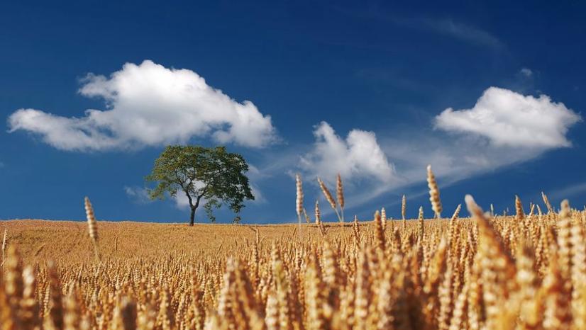 草原が広がる美しい景色。白い雲、青い空、一本の大樹と草原の美しい風景