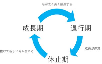 f:id:kusurihack:20200216154455p:plain