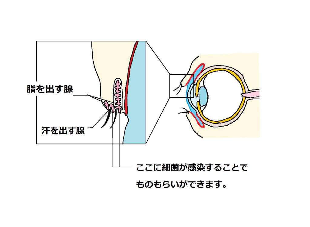 f:id:kusurino-ouchi:20190109180138p:plain