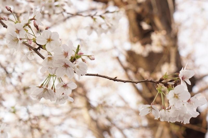 f:id:kusuwada:20210311092344j:image
