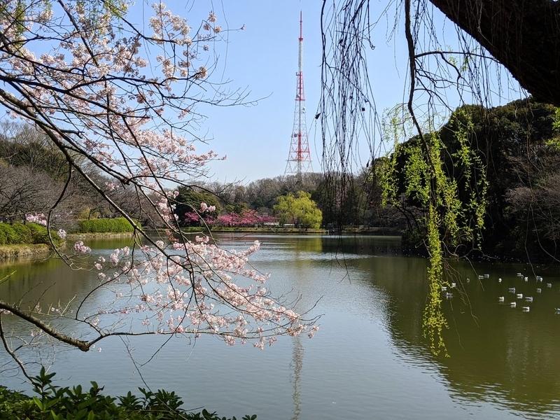 f:id:kusuwada:20210314173115j:image