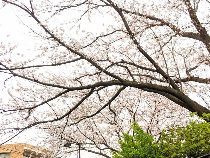 f:id:kusuwada:20210314173321j:image
