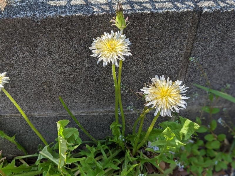 f:id:kusuwada:20210314174115j:image