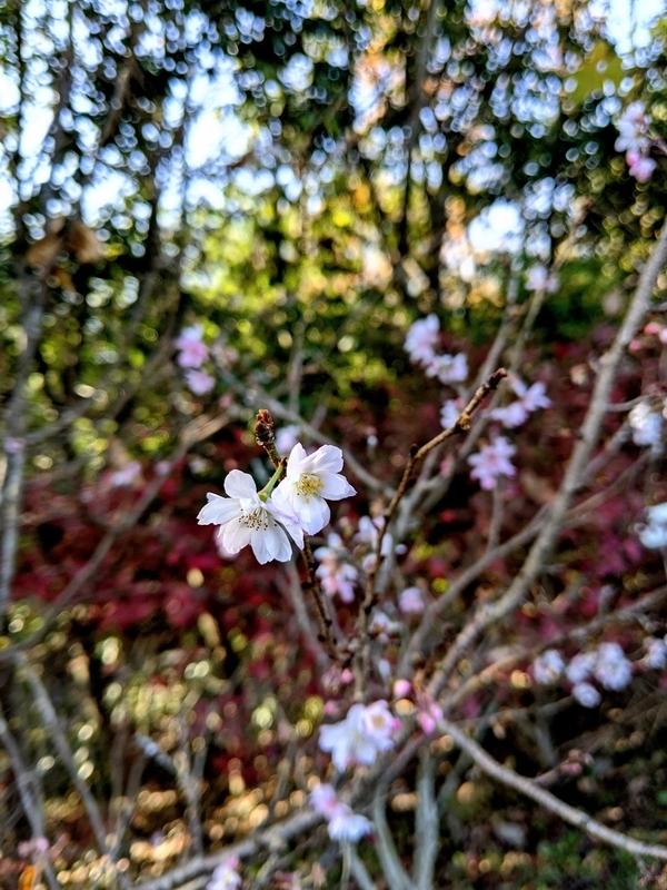 f:id:kusuwada:20210316175922j:image