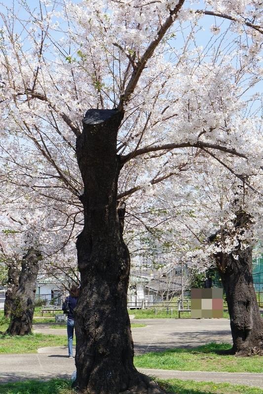 f:id:kusuwada:20210329023618j:image