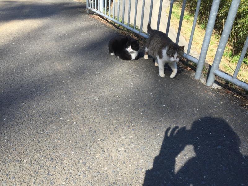猫いっぱい2