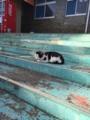 [猫][野良猫][田代島]猫1