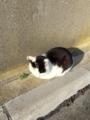 [猫][野良猫][田代島]猫2