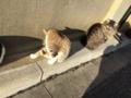 [猫][野良猫][田代島]猫いっぱい6