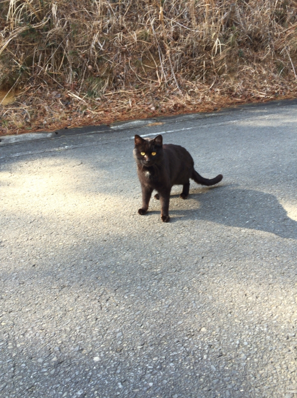 散歩コースに居た一匹だけの猫