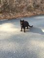 [猫][野良猫][田代島]散歩コースに居た一匹だけの猫