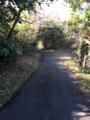 [田代島]散歩コース3