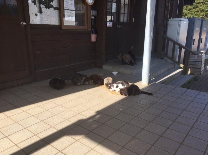 猫いっぱい 食事編